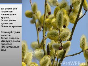 Уж верба вся пушистаяРаскинулась кругом;Опять весна душистаяПовеяла крылом.Стан