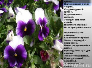 Фиалка сказочный цветок, Никто не может с этим спорить. Созданье дивной красоты
