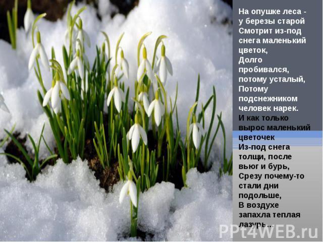 На опушке леса - у березы старойСмотрит из-под снега маленький цветок,Долго пробивался, потому усталый,Потому подснежником человек нарек.И как только вырос маленький цветочекИз-под снега толщи, после вьюг и бурь,Срезу почему-то стали дни подольше,В …