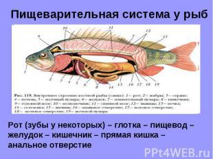 rassuzhdenie-temu-prezentatsiya-razvitie-pishevaritelnoy-sistemi-zhivotnih-temu