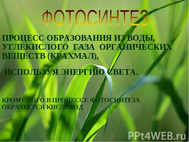 ФОТОСИНТЕЗПРОЦЕСС ОБРАЗОВАНИЯ ИЗ ВОДЫ, УГЛЕКИСЛОГО ГАЗА ОРГАНИЧЕСКИХ ВЕЩЕСТВ (КРАХМАЛ), ИСПОЛЬЗУЯ ЭНЕРГИЮ СВЕТА. КРОМЕ ТОГО В ПРОЦЕССЕ ФОТОСИНТЕЗА ОБРАЗУЕТСЯ КИСЛОРОД