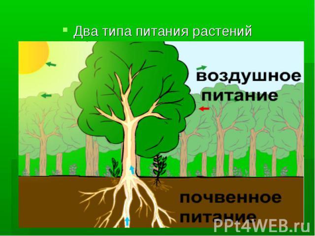 Два типа питания растений