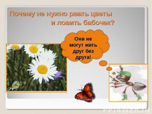 Почему не нужно рвать цветы и ловить бабочек?Они не могут жить друг без друга!