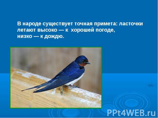 В народе существует точная примета: ласточкилетают высоко — к хорошей погоде, низко — к дождю.