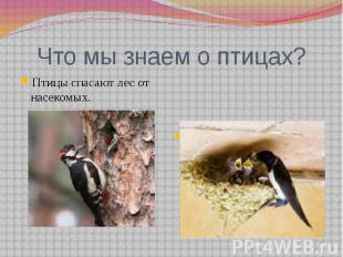 Что мы знаем о птицах?Птицы спасают лес от насекомых.Птиц нужно беречь. Нельзя р
