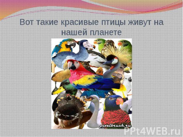Вот такие красивые птицы живут на нашей планете