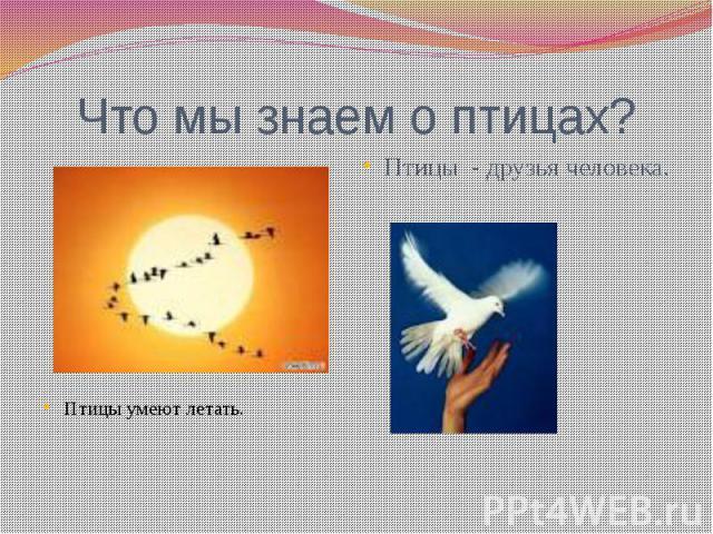Что мы знаем о птицах? Птицы - друзья человека. Птицы умеют летать.