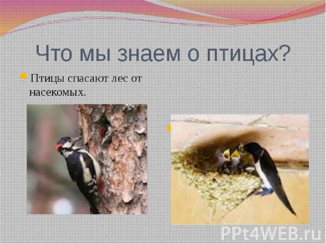 Что мы знаем о птицах?Птицы спасают лес от насекомых.Птиц нужно беречь. Нельзя разорять птичьи гнезда