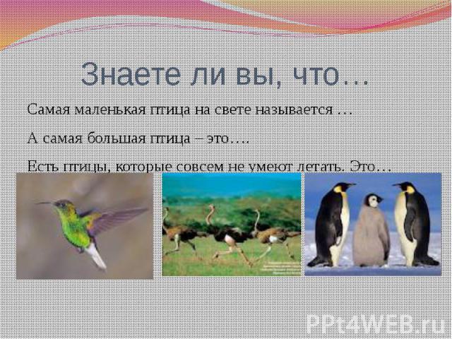 Знаете ли вы, что…Самая маленькая птица на свете называется …А самая большая птица – это….Есть птицы, которые совсем не умеют летать. Это…