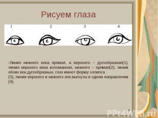 Рисуем глаза-Линия нижнего века прямая, а верхнего – дугообразная(1), линия верх