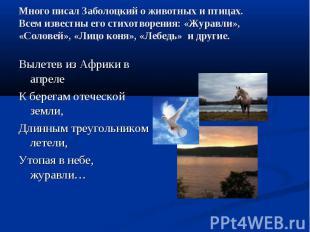 Много писал Заболоцкий о животных и птицах.Всем известны его стихотворения: «Жур