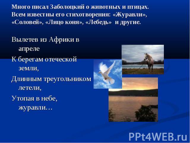 Много писал Заболоцкий о животных и птицах.Всем известны его стихотворения: «Журавли», «Соловей», «Лицо коня», «Лебедь» и другие.Вылетев из Африки в апрелеК берегам отеческой земли,Длинным треугольником летели,Утопая в небе, журавли…