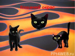 Кошачий окрас