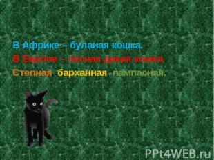В Африке – буланая кошка.В Европе – лесная дикая кошка.Степная, барханная, пампа