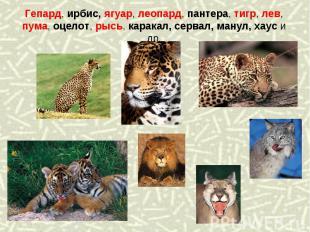 Гепард, ирбис, ягуар, леопард, пантера, тигр, лев, пума, оцелот, рысь, каракал,