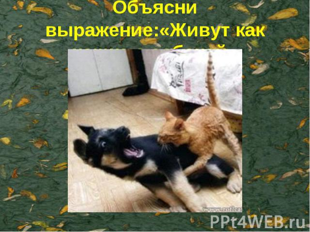 Объясни выражение:«Живут как кошка с собакой»