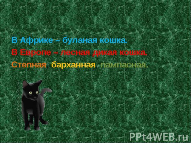 В Африке – буланая кошка.В Европе – лесная дикая кошка.Степная, барханная, пампасная.