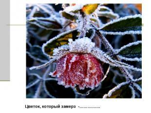Цветок, который замерз -……………