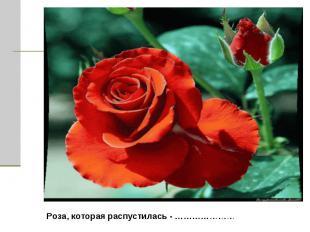 Роза, которая распустилась - …………………