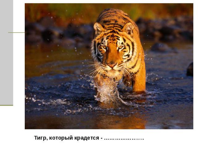 Тигр, который крадется - ………………….