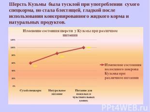 Шерсть Кузьмы была тусклой при употреблении сухого спецкорма, но стала блестящей