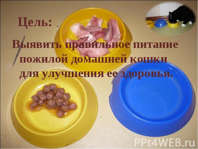 Цель: Выявить правильное питание пожилой домашней кошки для улучшения ее здоровья.
