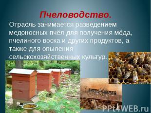 Пчеловодство.Отрасль занимается разведением медоносных пчёл для получения мёда,