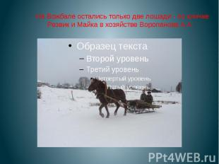 На Вожбале остались только две лошади - по кличке Резвик и Майка в хозяйстве Вор