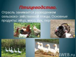 Птицеводство.Отрасль занимается разведением сельскохо- зяйственной птицы. Основн