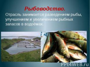Рыбоводство.Отрасль занимается разведением рыбы, улучшением и увеличением рыбных