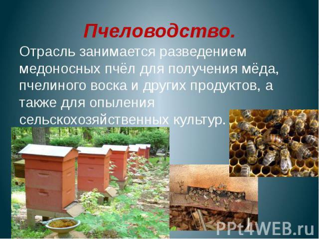 Пчеловодство.Отрасль занимается разведением медоносных пчёл для получения мёда, пчелиного воска и других продуктов, а также для опыления сельскохозяйственных культур.