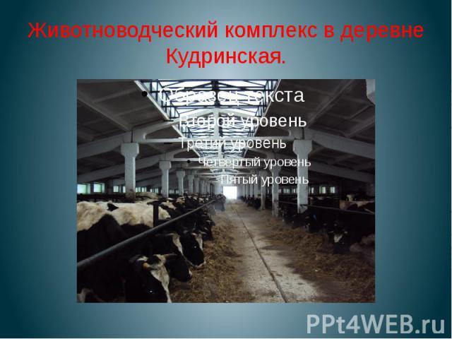 Животноводческий комплекс в деревне Кудринская.
