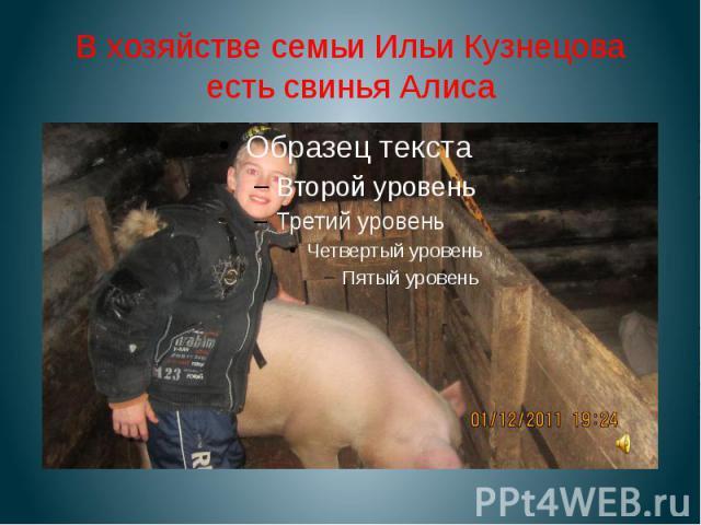 В хозяйстве семьи Ильи Кузнецова есть свинья Алиса