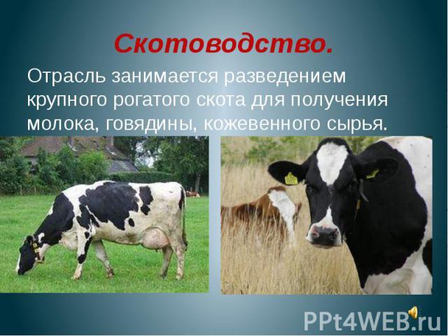 Скотоводство.Отрасль занимается разведением крупного рогатого скота для получения молока, говядины, кожевенного сырья.