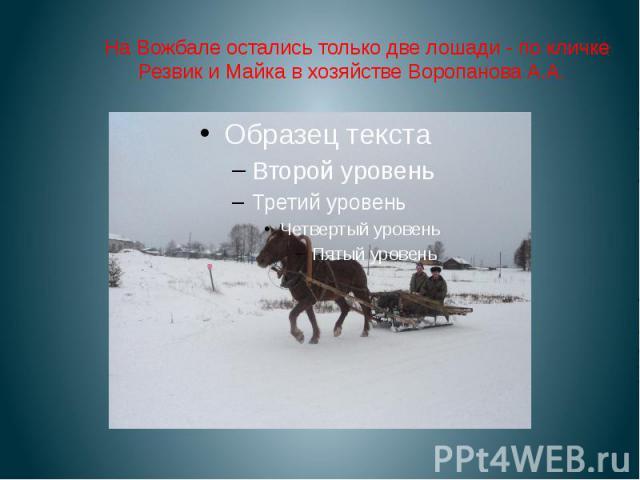 На Вожбале остались только две лошади - по кличке Резвик и Майка в хозяйстве Воропанова А.А.