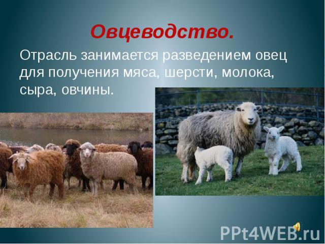 Овцеводство.Отрасль занимается разведением овец для получения мяса, шерсти, молока, сыра, овчины.