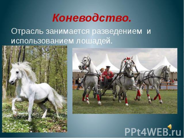 Коневодство.Отрасль занимается разведением и использованием лошадей.