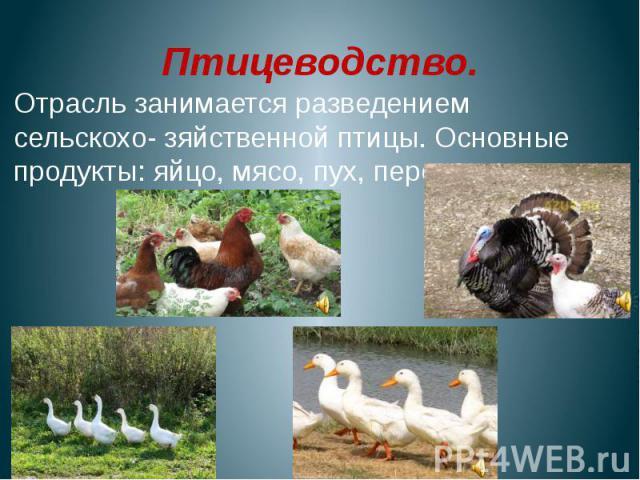 Птицеводство.Отрасль занимается разведением сельскохо- зяйственной птицы. Основные продукты: яйцо, мясо, пух, перо.