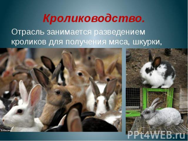 Кролиководство.Отрасль занимается разведением кроликов для получения мяса, шкурки, пуха.