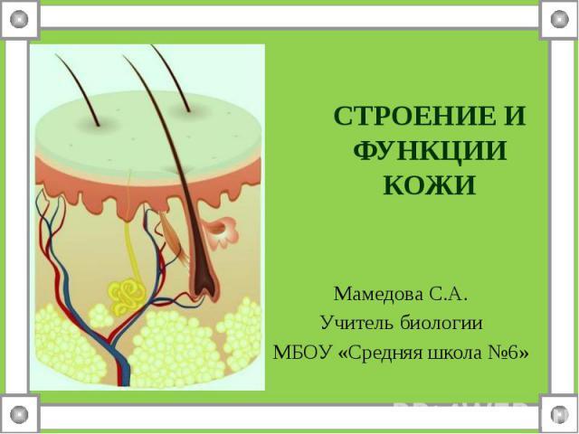 Строение и функции кожи Мамедова С.А.Учитель биологии МБОУ «Средняя школа №6»