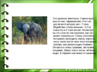 Это крупные животные. Самые крупные из них- африканские. Рост их достигает4 метр