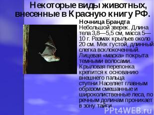 Некоторые виды животных, внесенные в Красную книгу РФ. Ночница Брандта Небольшой