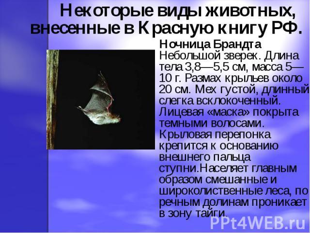 Некоторые виды животных, внесенные в Красную книгу РФ. Ночница Брандта Небольшой зверек. Длина тела 3,8—5,5 см, масса 5—10 г. Размах крыльев около 20 см. Мех густой, длинный, слегка всклокоченный. Лицевая «маска» покрыта темными волосами. Крыловая п…