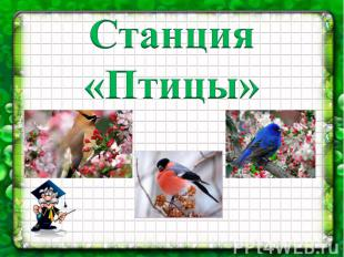 Станция «Птицы»
