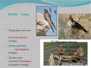 Первыми улетают насекомоядные птицы.Затем улетают зерноядные птицы.Позже всех ул