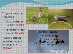 Средняя скорость перелёта :Мелкие птицы – около 30 км/чКрупные птицы – около 80