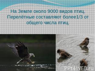 На Земле около 9000 видов птиц.Перелётные составляют более1/3 от общего числа пт
