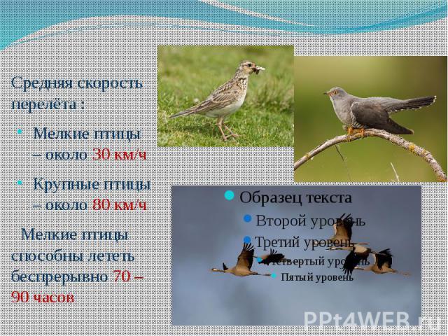 Средняя скорость перелёта :Мелкие птицы – около 30 км/чКрупные птицы – около 80 км/ч Мелкие птицы способны лететь беспрерывно 70 – 90 часов