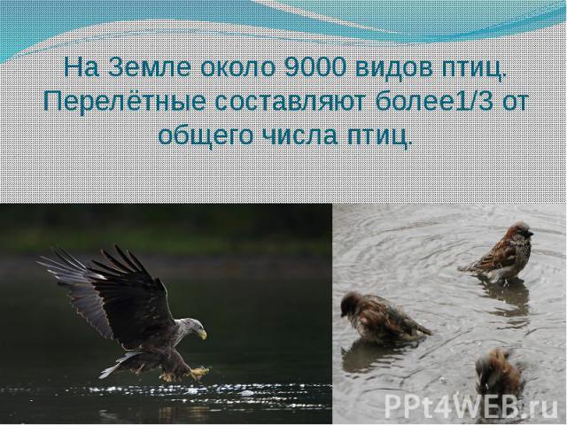 На Земле около 9000 видов птиц.Перелётные составляют более1/3 от общего числа птиц.