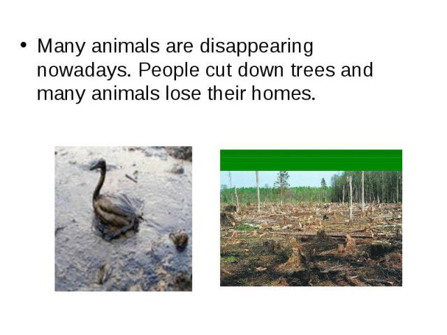 Many animals are disappearing nowadays. People cut down trees and many animals lose their homes.